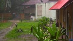 Tropical downpour, slow motion Stock Footage