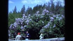 1971: men looking at purple flower bush MAINE Stock Footage