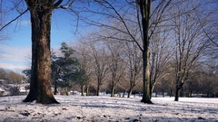 Passing Snowy Winter Park In The Sun Stock Footage
