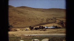 1971: herd of elephants in a field, next to a few white cars LAGUNA HILLS Stock Footage