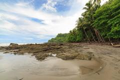 Rocky beach and trees Costa Rica Stock Photos