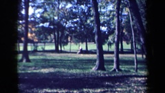 1959: sunny outdoor woodsy scenic park where family activities can be enjoyed Stock Footage