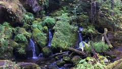 Oregon Cascades Watson Creek Oregon Stock Footage