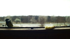 Bird Titmouse Eats Bread on a Wooden Window Sill Stock Footage