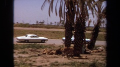 1971: wild lion escapes zoo cars driving by LAGUNA HILLS CALIFORNIA Stock Footage