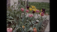 1958: a small garden patch grows near a families home NEW YORK Stock Footage