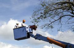Workers cut, prune tree branches with chainsaw using telehandler bucket Stock Photos