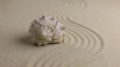 Zoom seashell lying on the sand beach Stock Footage