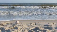 Zoom seashell lying on the sand beach Stock Footage