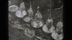 1938: heating up chickens tied above pans NEW YORK Stock Footage