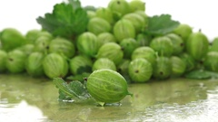 Closeup gooseberries on a background made of gooseberry Stock Footage