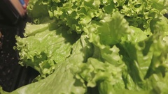 Green vegetables in your diet Stock Footage