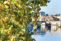 Branch of sycamore tree and Tiber River in Rome Stock Photos