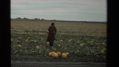 1984: a farmer and his family harvesting his produce from his field CALIFORNIA Stock Footage