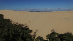Video of pine forest near to the largest sand dune and blue sky. Stock Footage