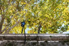 Yellow sycamore trees over walls of Tiber River Stock Photos