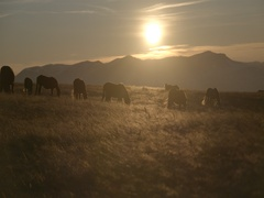 Herd of horses on a mountain meadow at sunset in super slow motion Stock Footage