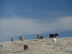 Herd of horses on the meadow with blue sky background Stock Footage