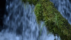 Moss Covered Tree against blue cascade Watson Creek Oregon Stock Footage