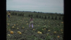 1984: women doing the agriculture work,in their field. CALIFORNIA Stock Footage