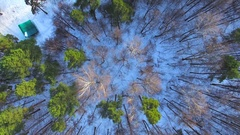 Pines and trees without leaves in the winter Stock Footage