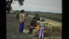 1984: a family is picking pumpkins from the pumpkin patch. CALIFORNIA Stock Footage