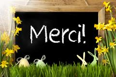 Sunny Narcissus, Easter Egg, Bunny, Merci Means Thank You Stock Photos