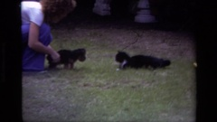 1979: a puppy is introduced to a cat who runs away. LAGUNA BEACH CALIFORNIA Stock Footage