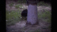 1979: a person with playing with a black little puppy and the puppy roaming Stock Footage