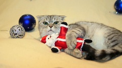Scottish fold cat with santa claus toy Stock Footage