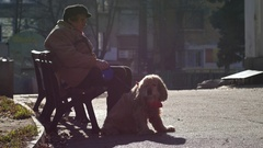 Senior woman sit on a bench with big leashed white dog in park Stock Footage