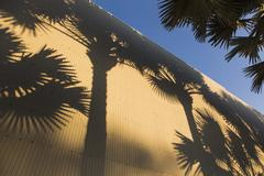 Shadow of palm trees on corrugated wall against sky Stock Photos