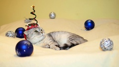 Scottish fold cat with christmas hat Stock Footage
