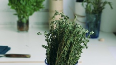 Thyme - delicious culinary herb used for cooking and tea. Stock Footage