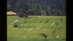 1984: the man properly maintained his agricultural work and land CAMBODIA Stock Footage