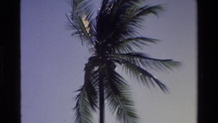 1984: palm tree blowing in the wind against a beautiful azure backdrop. Stock Footage