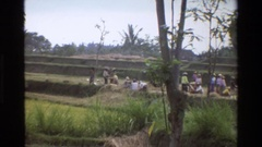 1984: group of people working in the land SINGAPORE Stock Footage