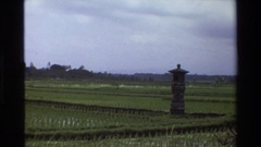 1984: thousands of shoots stick up in a rice field SINGAPORE Stock Footage