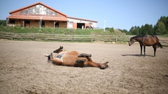 Horse lying on a meadow Stock Footage