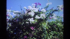 1984: lots of flower plants in a large open area with no people around SINGAPORE Stock Footage