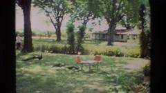1983: a group of peacocks strut in a yard near a house NAIROBI KENYA Stock Footage