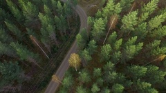 Thinned forest and forest machine trails by a small road Stock Footage
