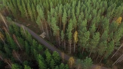 Remains of forest thinning by a small road in Finnish countryside Stock Footage