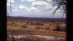 1983: a herd of elephants mill about in a field of dry grass KILAGUNI KENYA Stock Footage