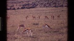 1983: a breath taking food MARA TANZANIA Stock Footage