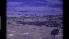1983: panning view from left to right of an african plain in the dry season Stock Footage