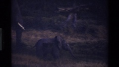 1983: elephant walking through grass on savanna with tiny baby MARA TANZANIA Stock Footage