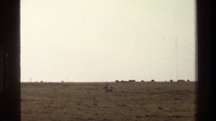 1983: two antelope chase each other in circle and jump while herd stands along Stock Footage