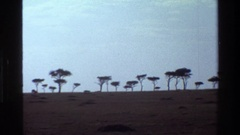 1983: a large area of land covered with number of trees MARA TANZANIA Stock Footage