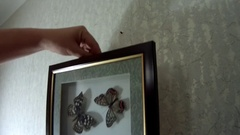 The picture with butterflies hang on the wall Stock Footage